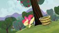 Apple Bloom bucks a tree S3E08.png