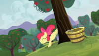 Apple Bloom bucks a tree S3E08