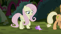 Bird tweeting at fake Fluttershy for help S8E13