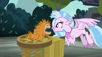 Silverstream enamored with the puckwudgie S8E2