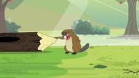 Beaver chittering S3E05