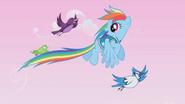S01E11 Rainbow Dash i ptaki