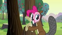 Pinkie Pie beaver costume S2E18