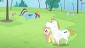 Rainbow 'let me see you flap it!' S4E10.png