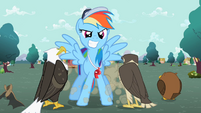 Rainbow Dash in front of the flyers S2E07