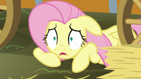 Fluttershy -How could I forget-- S5E21