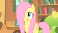 Fluttershy stressed S01E17.png