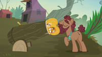 Hooffield stallion loads hollow pumpkin into a cannon S5E23
