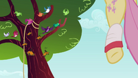 Butterflies and birds at trees S2E22