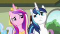 Cadance and Shining Armor looking confused S7E3.png