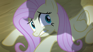 S04E07 Fluttershy w cieniu Applejack