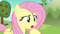 """Fluttershy """"that ball moves pretty fast"""" S6E18.png"""