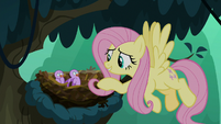 Fluttershy greeting the little birds S8E13