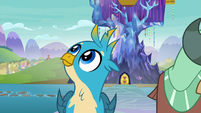 Gallus looking at the sky S8E2