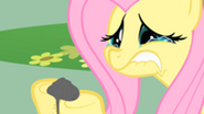 201px-Crying Fluttershy S01E22