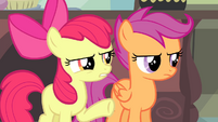 Apple Bloom -about this for weeks, right-- S4E19