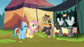 Fluttershy and RD meet antique chicken trader S4E22.png