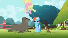 Rainbow Dash with animals S2E7