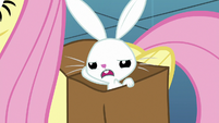 Angel Bunny looking annoyed S8E2