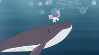 Sweetie Belle meets a whale in the ocean S9E22