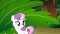 Confused Sweetie Belle S01E18.png