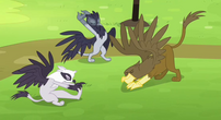 Griffons stretching S4E10
