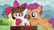 Scootaloo puts Pipsqueak on the box S5E18
