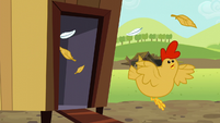 Chicken running out of coop in panic S5E17