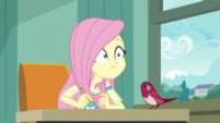 Fluttershy hears Mr. Doodle tell the class to begin EGDS10
