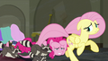 Fluttershy running away from raccoons S6E9.png