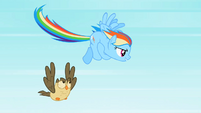 Rainbow Dash about to fly fast S2E07