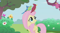 Fluttershy smiling with birds on her head S1E3