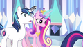 Princess Cadance & Shining Armor dumbfounded S3E1.png