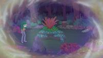 Wallflower Blush returns to the garden EGFF
