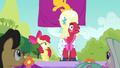 Orchard Blossom cheering excitedly; Apple Bloom nervous S5E17.png