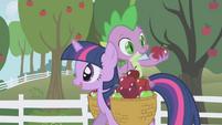 Spike mirando una manzana