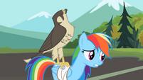Rainbow Dash falcon on my back S2E7