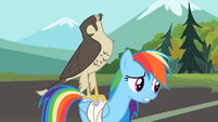 Rainbow Dash falcon on my back S2E7