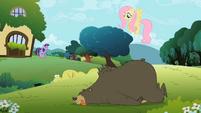 Fluttershy Bear K.O. S2E3