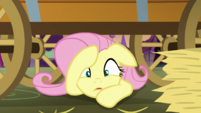 Fluttershy busted S5E21