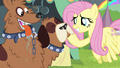 Fluttershy scratches orthros' chin S4E22.png