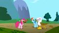 Gilda sees Pinkie Pie wearing strange headgear S1E05.png