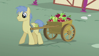 Goldengrape pulling cart of apples S5E18