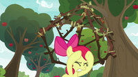 Cage trap falling toward Apple Bloom S9E10