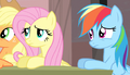 Fluttershy and Rainbow Dash confused S5E1.png