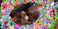 Bronyboybro cats 1.jpg