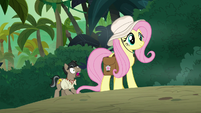 Fluttershy facing the jungle cats S9E21