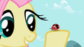 Fluttershy with ladybug S2E07.png