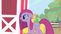Pinkie Pie looks at what her friends have prepared for her S1E25.png
