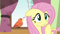 Fluttershy looking concerned S6E11